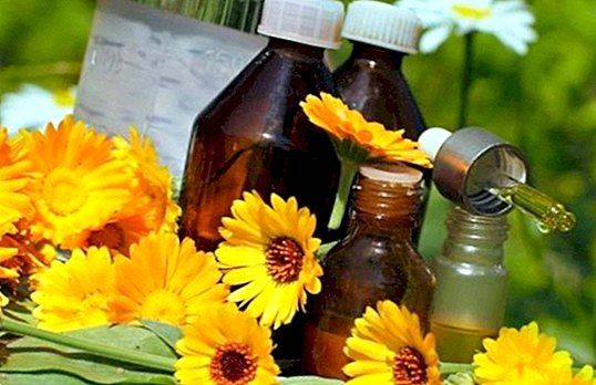 How to prepare an ideal homemade calendula oil for massages