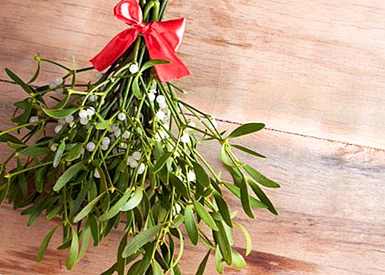 What is the Christmas mistletoe and what is done with it at Christmas