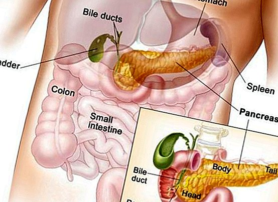 Functions of bile