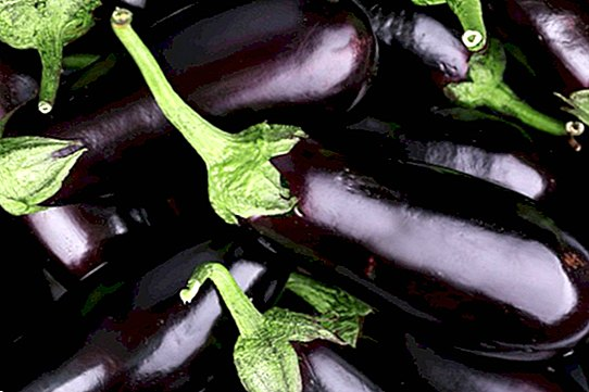 Eggplants: nutritional benefits and incredible properties