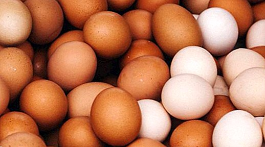 Egg nutrition information - nutrition and diet