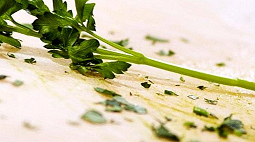 nutrition and diet - Parsley: benefits, properties and contraindications