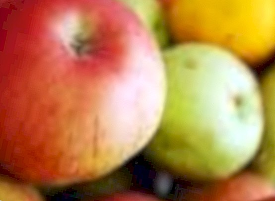 nutrition and diet - Fructose: benefits, effects on health and nutritional values