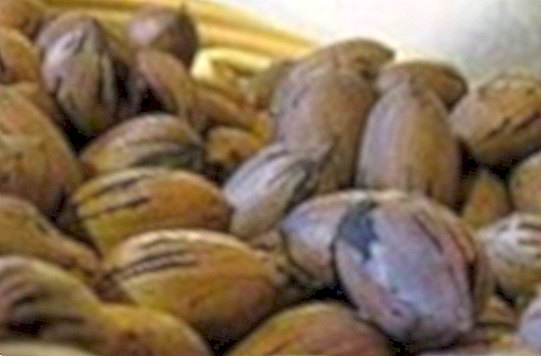 Nutritional information for pecan nuts