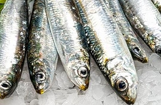 Sardines: discover the nutritional properties of this great little treasure