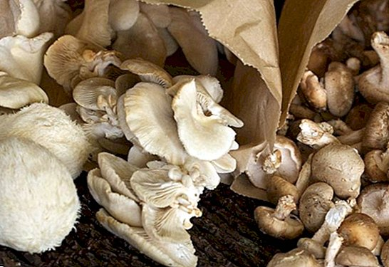 How many calories the mushrooms bring - lose weight