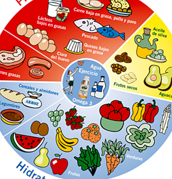 Diet of the Zone: balanced and adequate diet to lose weight - lose weight