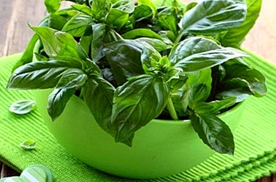 2 natural remedies with basil - Natural medicine