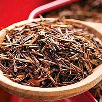 Rooibos tea: benefits and properties for health