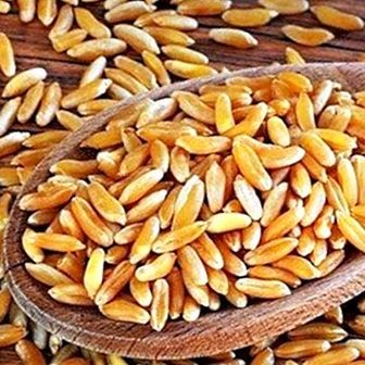 Kamut or khorasan wheat: what it is, benefits and nutritional properties