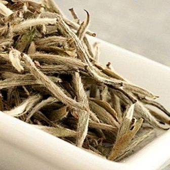 White tea: properties, benefits and contraindications