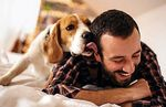 Dogs at home 8 benefits of having dogs! - healthy tips