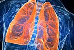 Functions of the lungs - curiosities