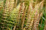 Beware of horsetail: its main contraindications