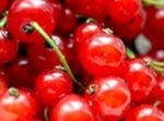 Currants: benefits and properties