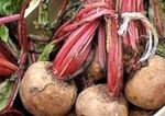 Red beet: properties and benefits